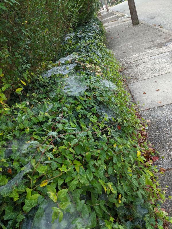 Grass spider webs 5