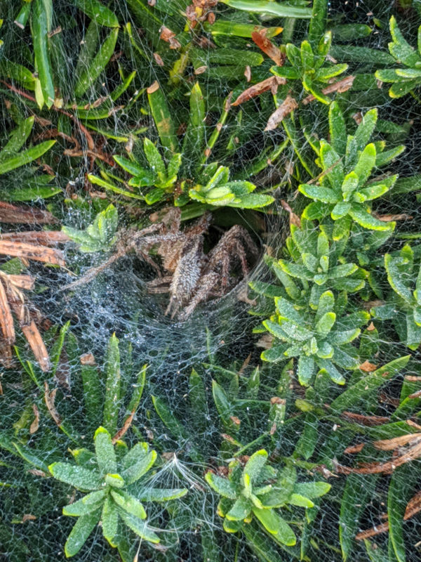 Grass spider webs 7
